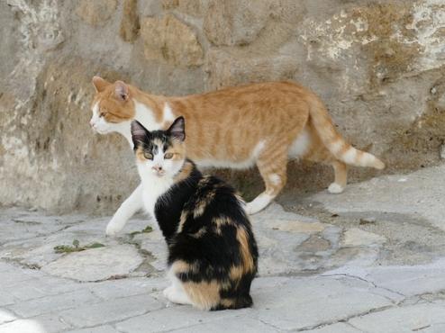 Ilustrativna fotografija uličnih mačaka